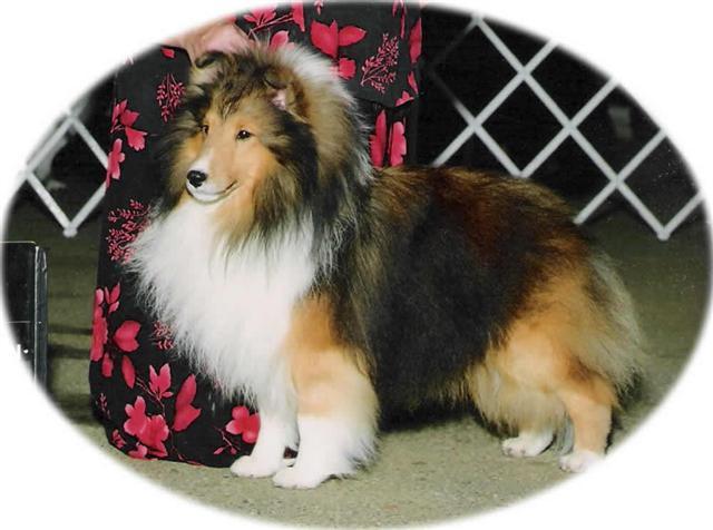Bucyrus Dog Show
